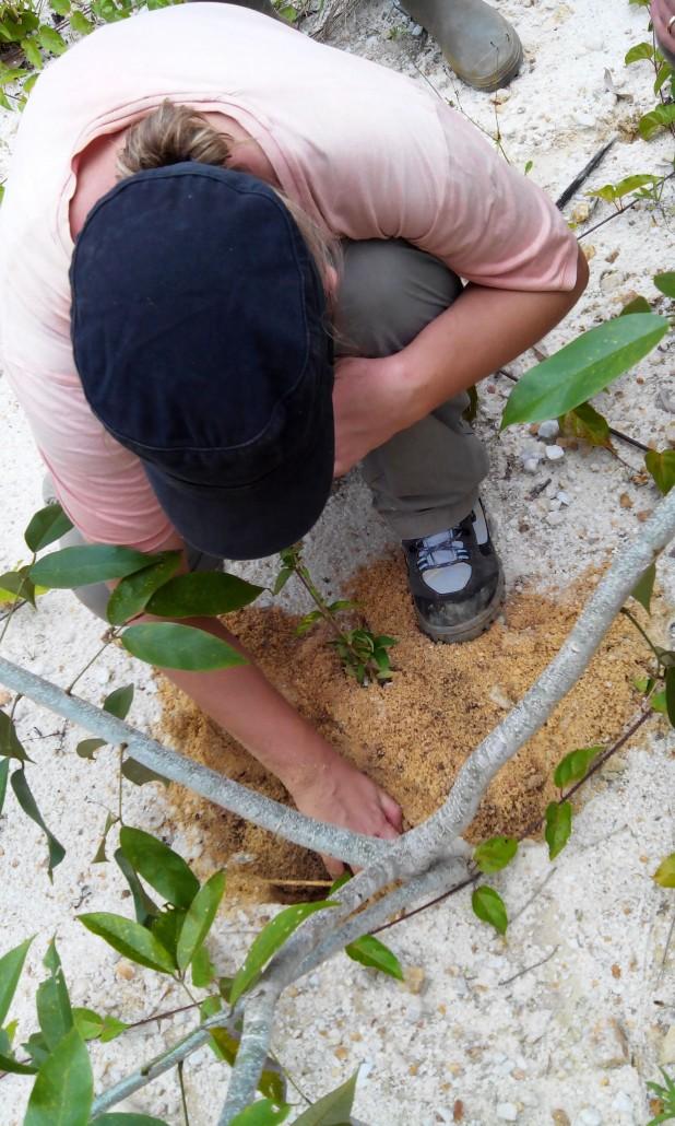 Observation des racines
