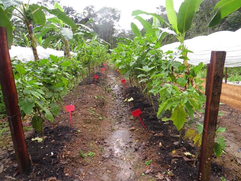 Agriculture éco-efficiente