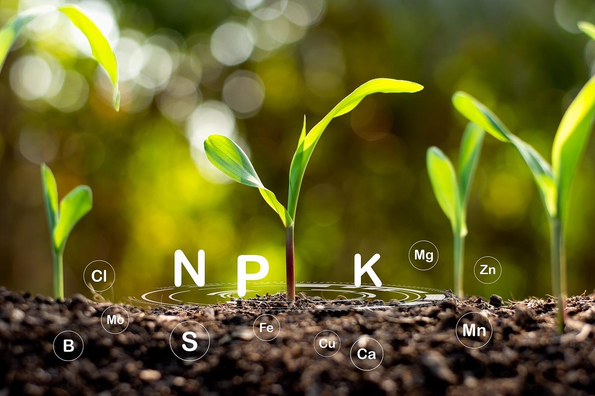 NPK plante