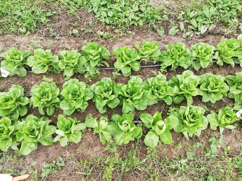 Essais sur les salades chez Gilles Sanchez